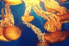 Картина в спальню Медузы