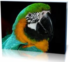 Постер Попугай 2987415