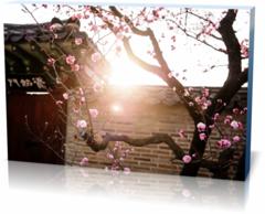 Холст в гостиную Республика Корея-republic-of-korea-2777845